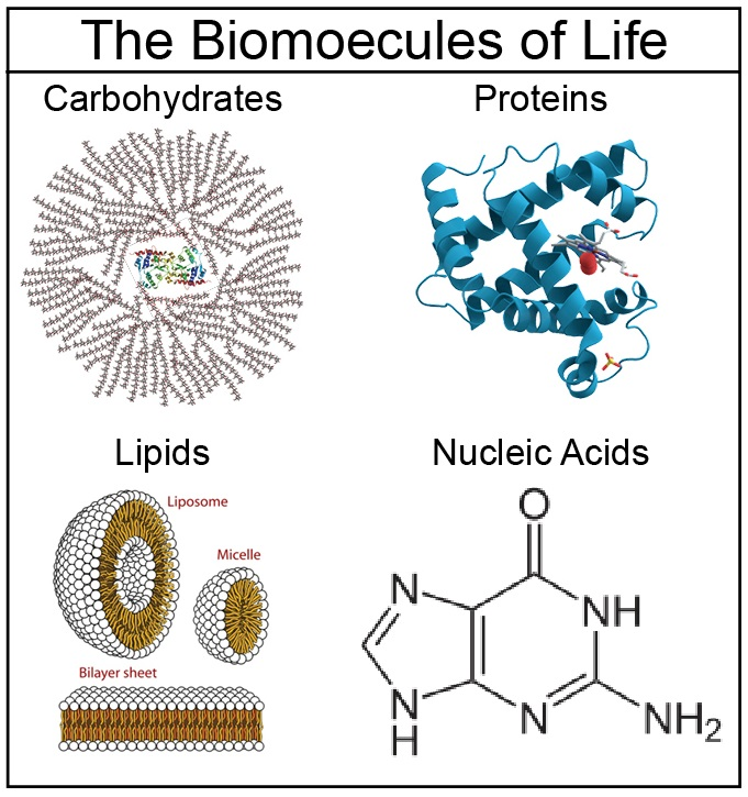 four classes of biological molecules